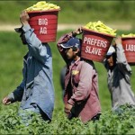 'Big Ag' Favors Illegal Immigration