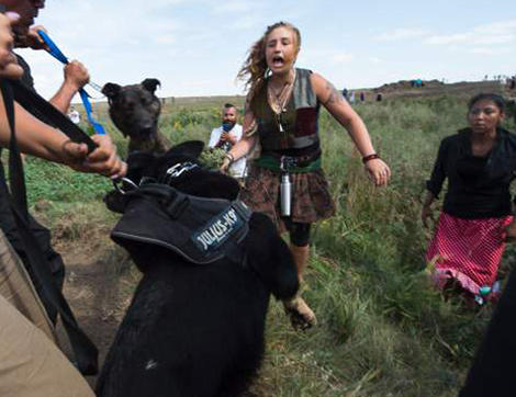 Protestors were attacked by dogs and sprayed with an eye and respiratory irritant yesterday when they arrived at the site to protest after learning of the bulldozing work. / AFP / Robyn BECK        (Photo credit should read ROBYN BECK/AFP/Getty Images)