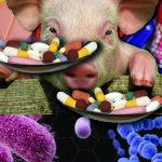 We Told You So: Antibiotic Resistance & the Food Supply
