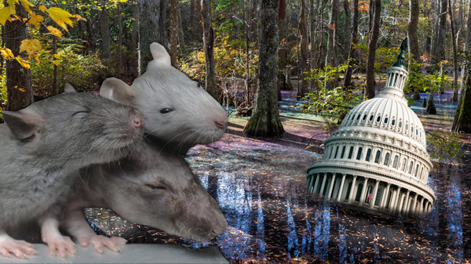 Swamp never rats
